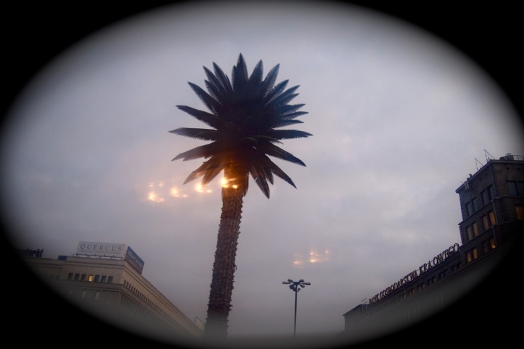 Palmu keskellä talvimaisemaa – Varsovan erikoisuuksia 4